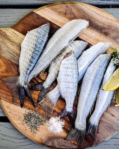 fishfood-1.jpg